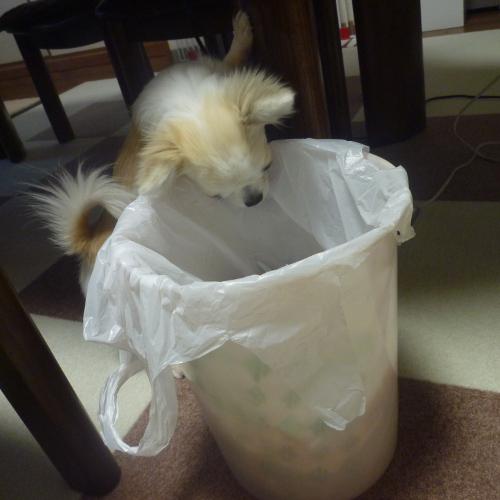 ゴミ箱をあさる りく