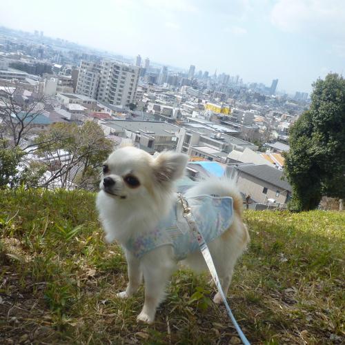 海と山の神戸です。