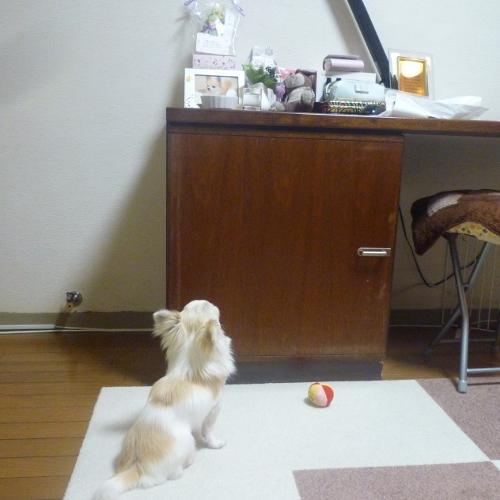 先輩犬、くり のお供え物