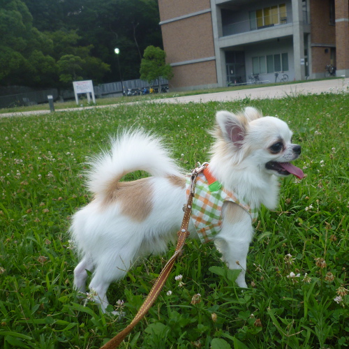 神戸大学へ、お散歩