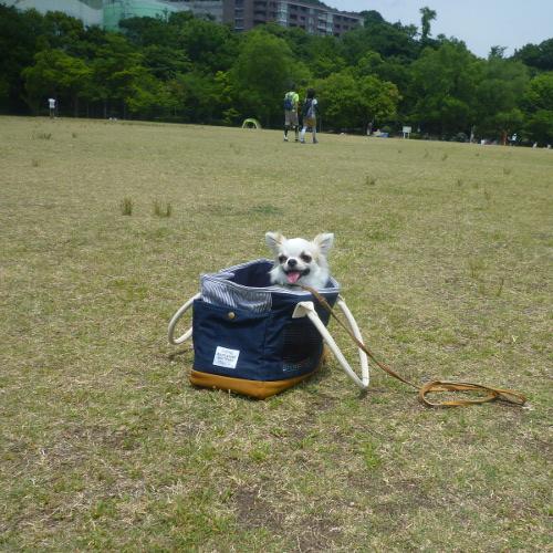 ひろ〜い公園