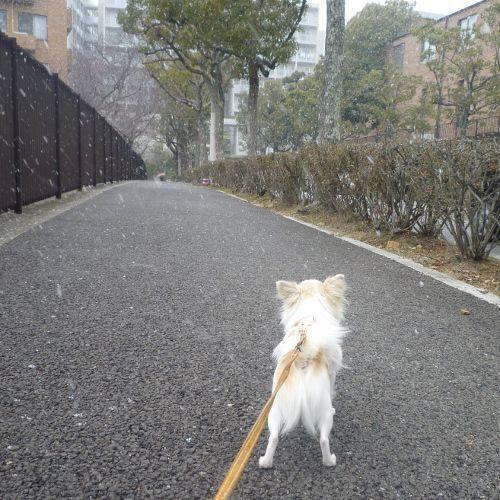今日は雪がチラチラ