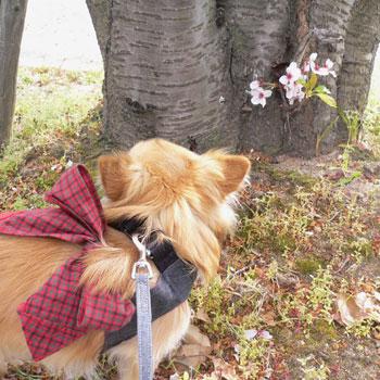 春らしい暖かさ・・・