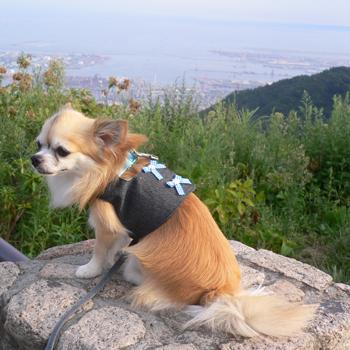 六甲山です♪
